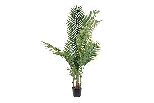 Planta Vidi