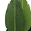 Thumbnail: Planta Sterlizia