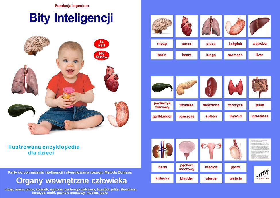 Bity inteligencji flashcards Organy wewnętrzne człowieka