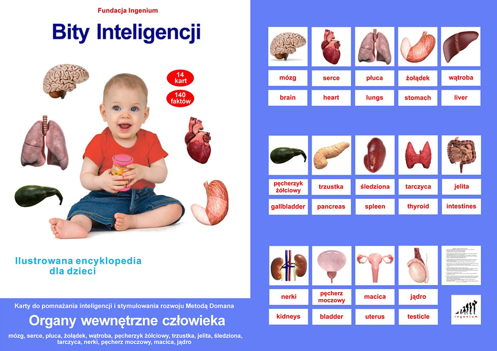 Bity inteligencji Organy wewnętrzne człowieka