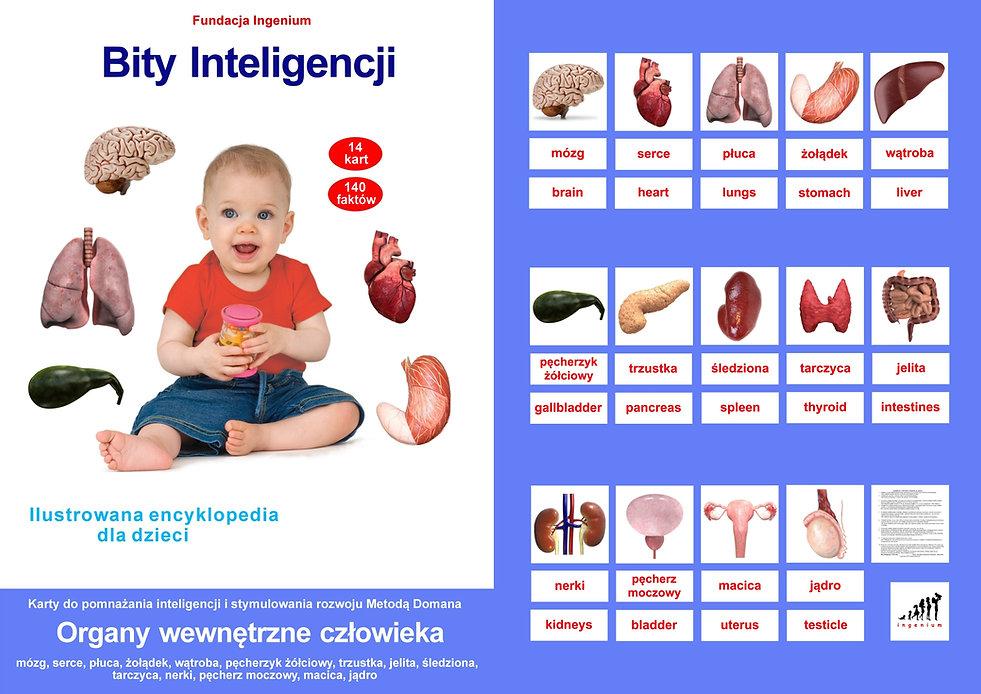 Bity inteligencji Karty Flashcards Organy wewnętrzne człowieka Wczesna edukacja Metoda Domana Wczesna edukacja karty obrazkowe