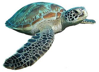 Żółw zielony