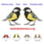 Metoda Domana Mobil do druku Ptaki Birs Printable mobile