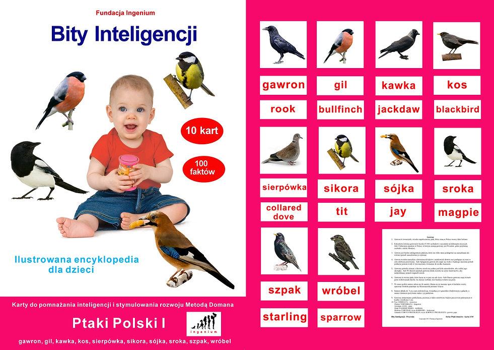 Bity Inteligencji i nauka czytania globalnego - flashcards - karty do pobrania Zestaw Ptaki Polski I Wczesna edukacjaWczesna edukacja karty obrazkowe Metoda Domana