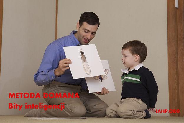 Metoda Domana Bity inteligencji to karty do pomnażania inteligencji małych dzieci. Wczesna edukacja Metoda Domana