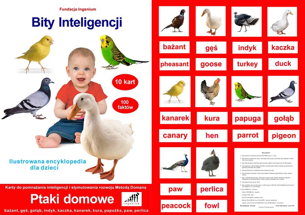 Bity inteligencji  - flashcards - karty do pobrania Zestaw Ptaki domowe Wczesna edukacja Metoda Domana Wczesna edukacja karty obrazkowe