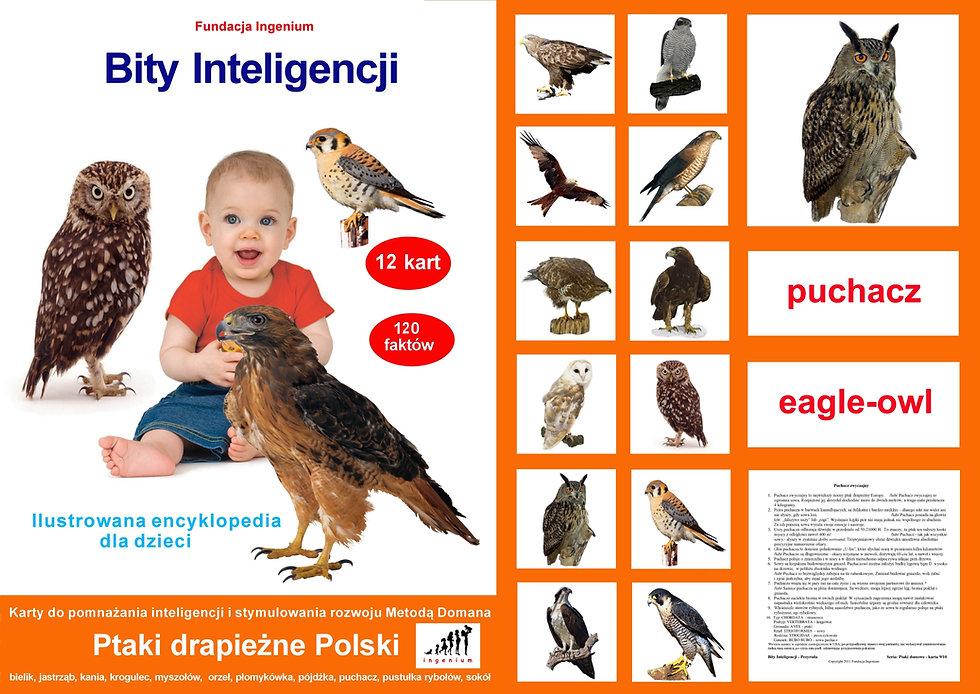 Bity inteligencji Seria Ptaki drapieżne Polski bity inteligencji do pobrania