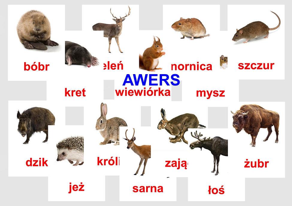 Wczesna edukacja karty obrazkowe Bity inteligencji - karty obrazkowe z rewersem do czytania globalnego w wersji polskiej i angielskiej.