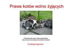 Prawa kotów wolno żyjących Czytanie glob