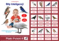 Bity Inteligencji i nauka czytania globalnego karty typu flashcards do pobrania Zestaw PtakiPolski II Wczesna edukacja Metoda Domana Wczesna edukacja karty obrazkowe