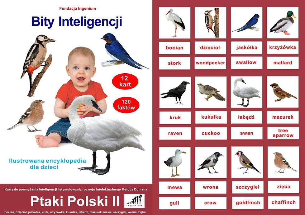 Bity Inteligencji do pobrania