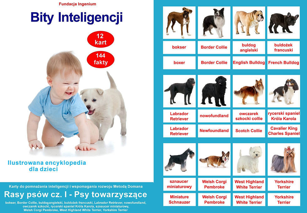 Karty Bity inteligencji do pobrania Rasy psów flashcards angielski metodą Domana