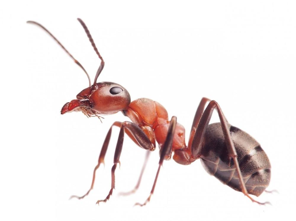 Bity inteligencji - owady