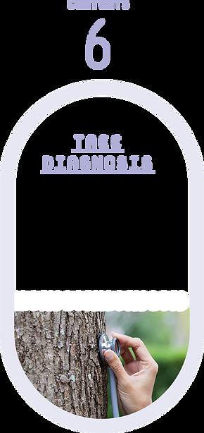 樹木の診断・治療