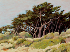 Monterey Cypress Grove