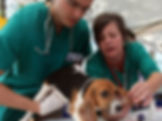 Ambulatorio veterinario San Martino Avesa Verona