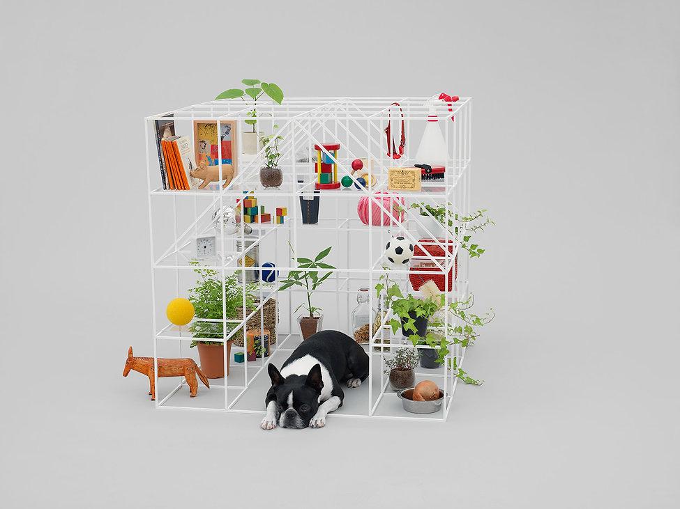 AFD,Sou FUJIMOTO, Hara Design Institute,Boston Terrier