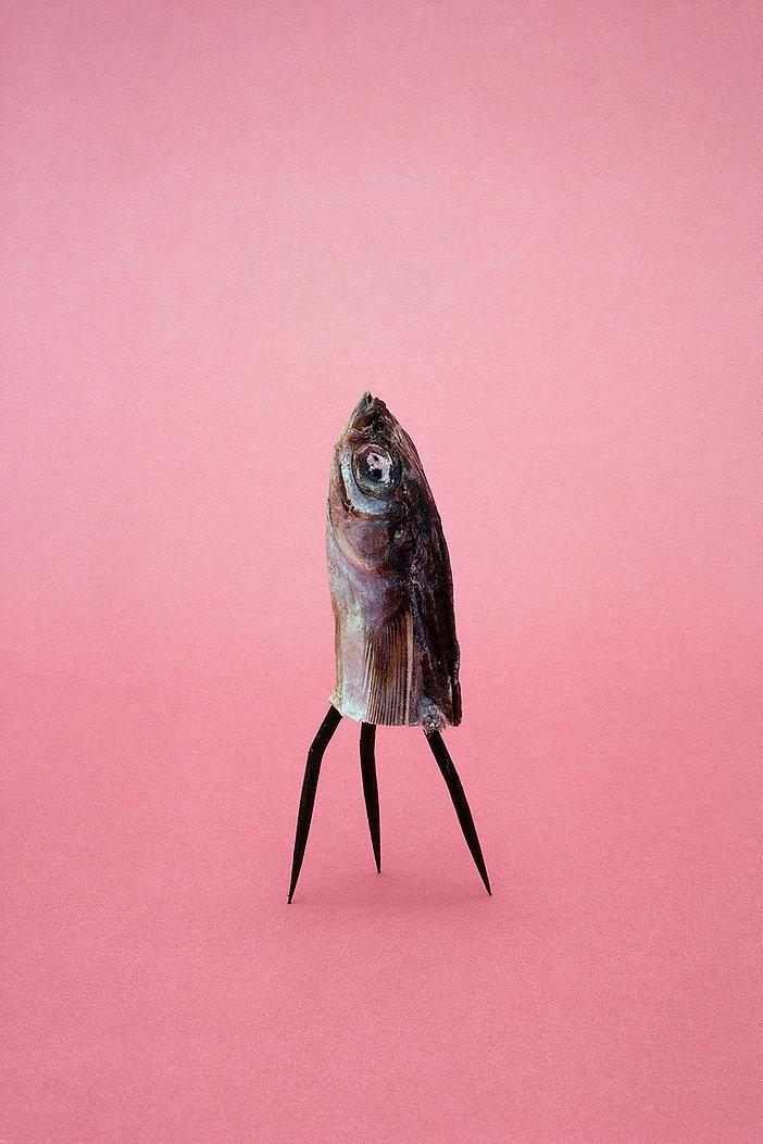 Dried fish head, three legs, TEA FOR TWO,1986