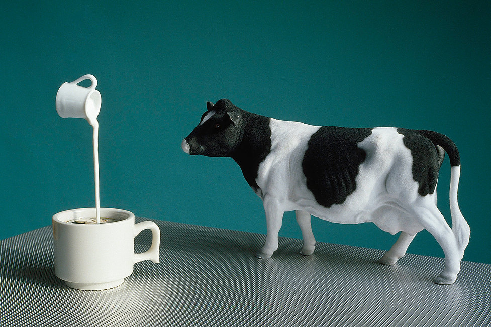 Cow,Milk,TEA FOR TWO