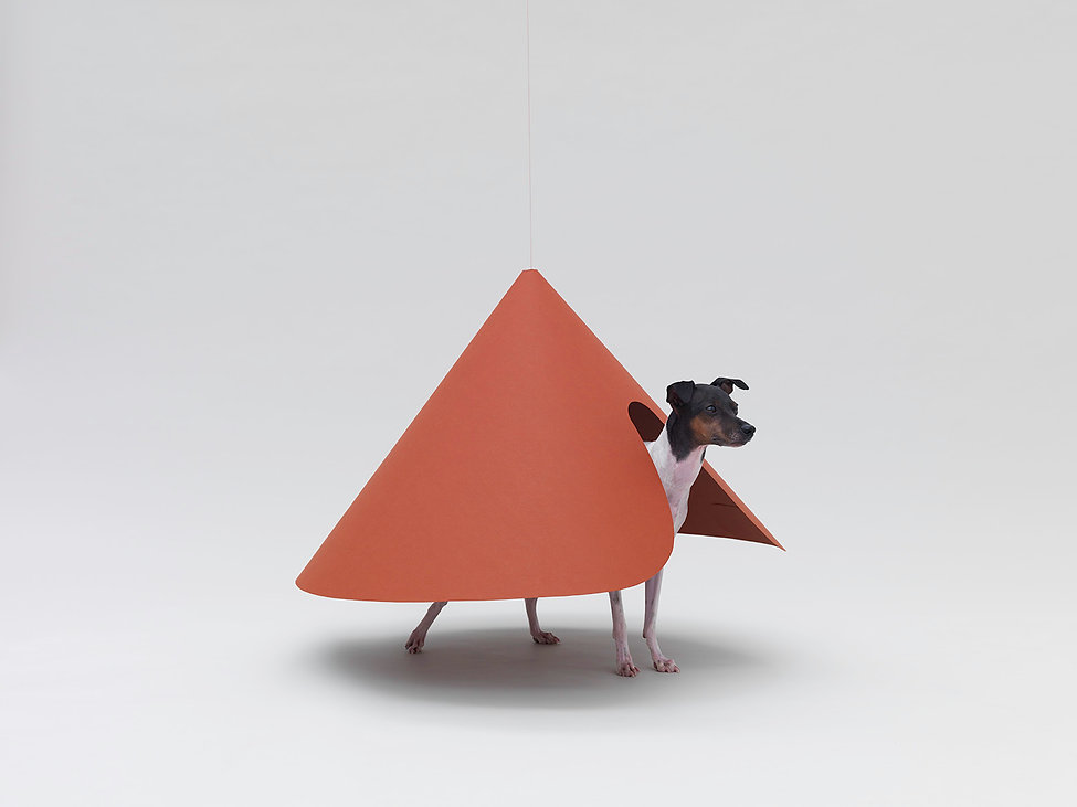AFD,Hara Design Institute,Japanese Terrier