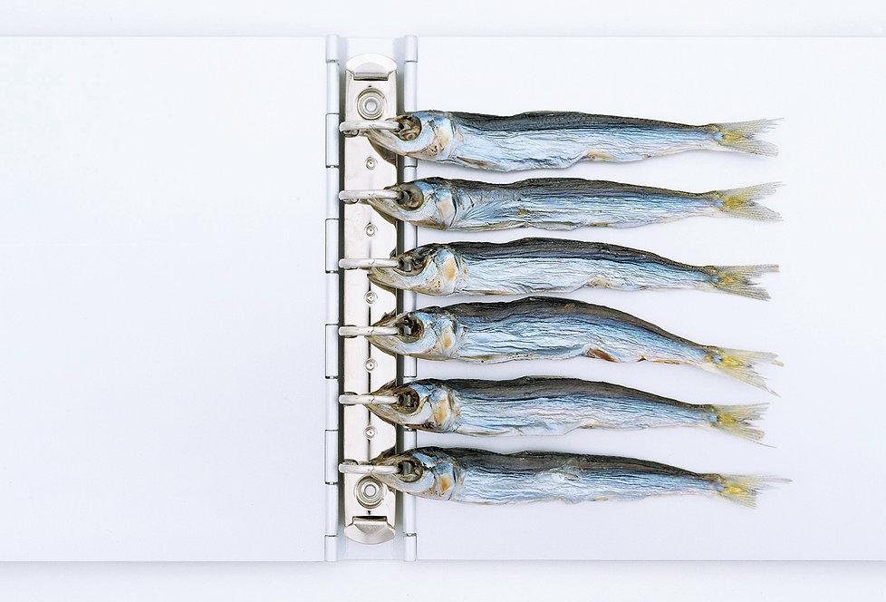 Muji Book,Aluminium binder,Dried fish,Masaaki HIROMURA,Kazuk KOIKE