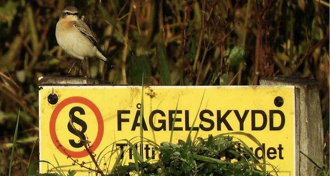 Fågelskydd.JPG