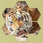 Tiger Hexa1.JPG