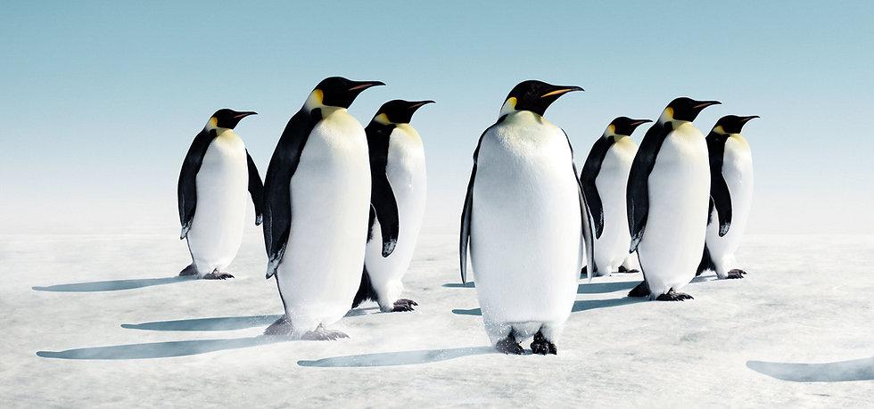 BLV_Header_Penguins.jpg