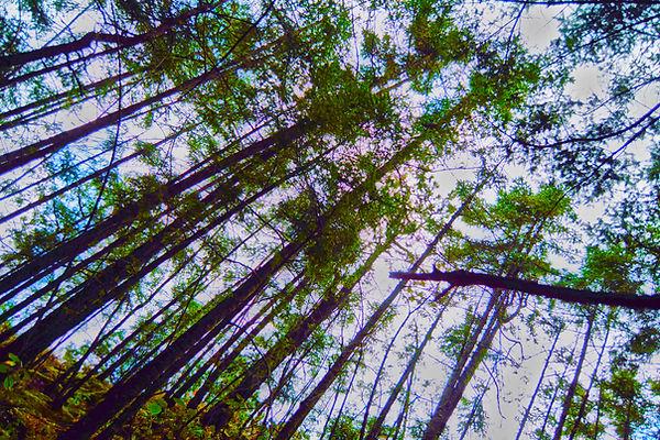 Bosque del Ajusco, Pico del Águila