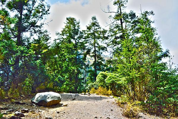 La mesa redonda, Pico del Águila Ajusco