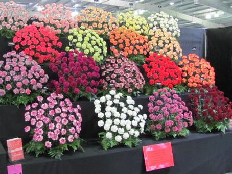 Gold Medal and Best New Floral at Edinburgh Gardening Scotland