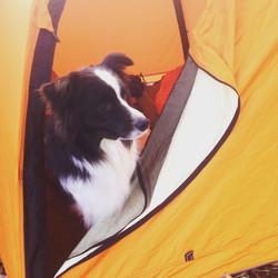 Buoy dog camping, San Simeon