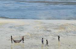 Mkwiro, Wasini Island, Kenya