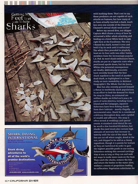 Sharks fins