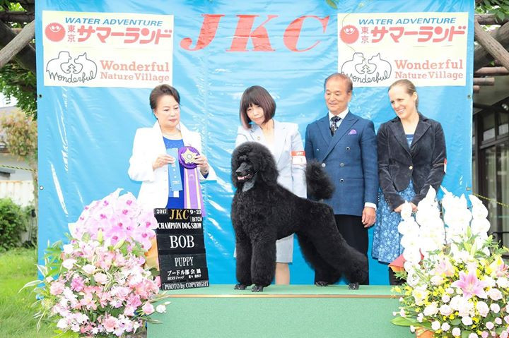 Then at the Japan National Poodle Specia