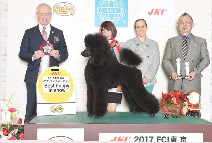 4th Puppy Best in Show at_the prestigiou