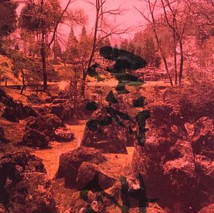 7- Le jardin japonais no.5.jpg
