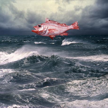 Ronald Labelle, À la recherche du poisson rouge, non daté