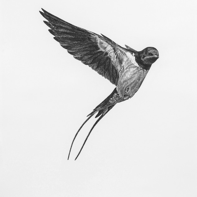 45 migration detail a (Denis Farley).jpg