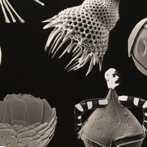 Annie St-Jean, Chez les myxomycètes, 2020