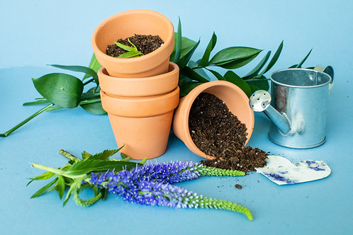 Plant and Praise Activity