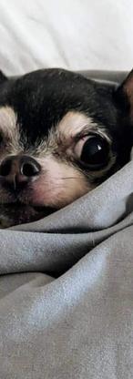 Poppy's other dog Lola