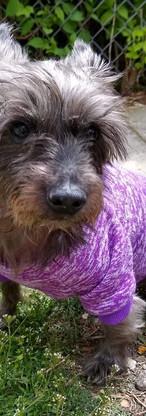 Aura's dog Bitsy