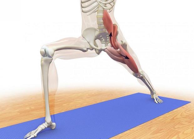 Ileopsoas, conosciamo il muscolo della stabilità