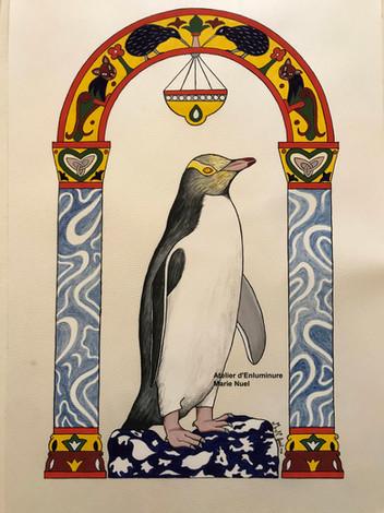 Yellow-eyed penguin / Manchot à oeil jaune