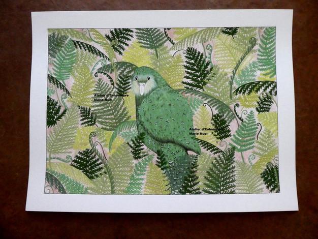 Kakapo / The kakapo