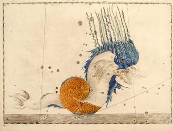 Armadillo acuático