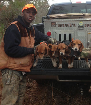 -abbit hunting with beagles