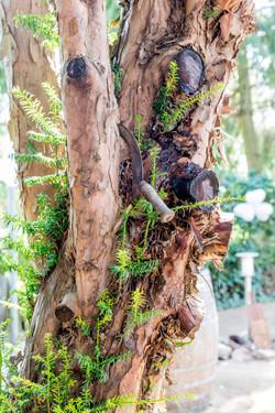 Baum mit Sichel