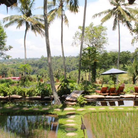 A Honeymoon Story: Bali
